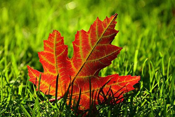 Herbst – Zeit der Erkältungen, der Impfung und der Sehnsucht nach Sonne